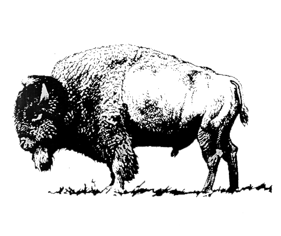 especes de bisons